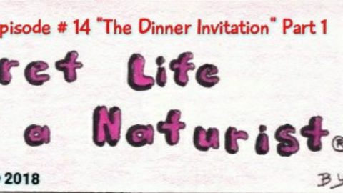 the secret life of a naturist #14 dinner invitation